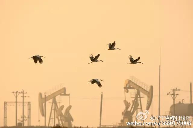 这里是珍稀鸟类丹顶鹤繁殖的最南限,也是黑嘴鸥种群最大的繁殖地和